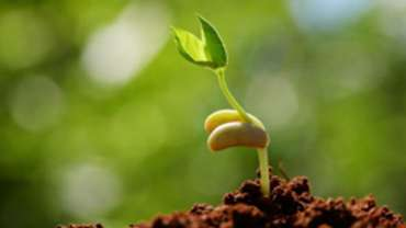 Sprouting for Life.